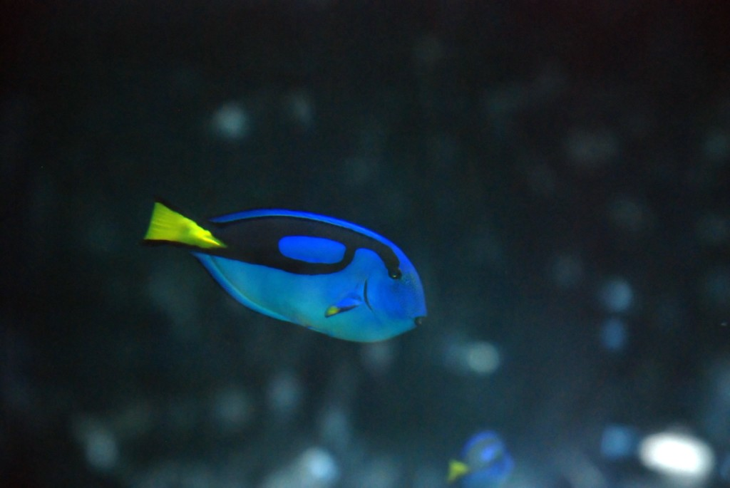 Exciting fans throughout the world, Finding Dory is poised to splash onto big screens in 2015.
