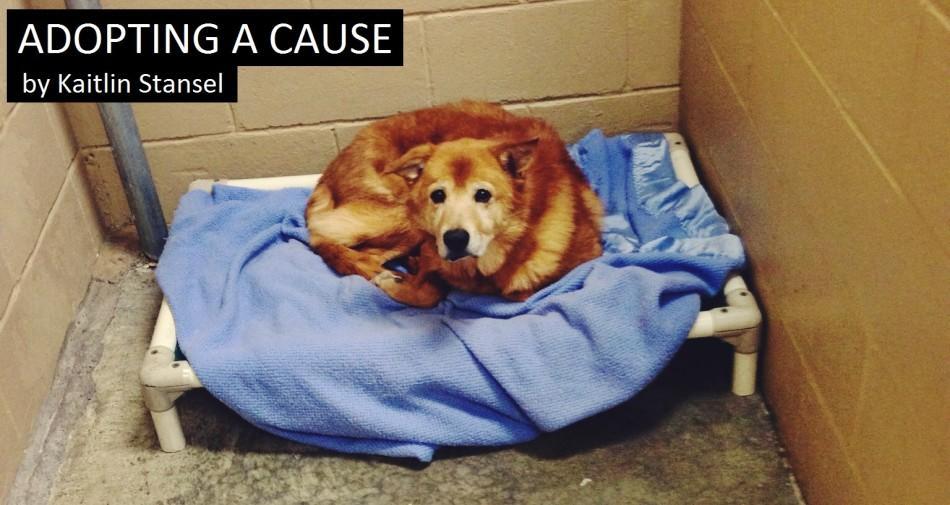 Adopting a cause