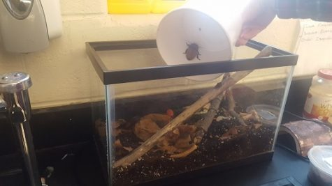 Environmental classes procure cockroaches for study of biomes