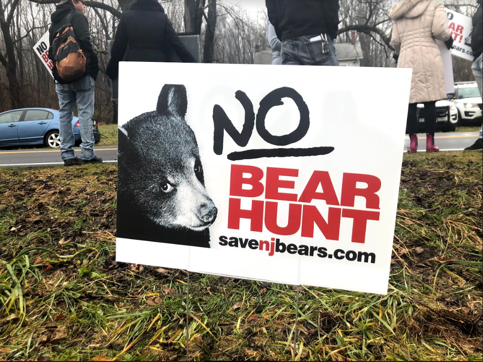BEAR+Group+supplies+signs+for+protesters+who+may+not+have+a+sign+already.+Previous+to+this+protest%2C+BEAR+Group+members+have+been+fighting+for+bears+in+other+protests.+They+continuously+urge+Phil+Murphy+and+hunters+to+eliminate+the+bear+hunt.+